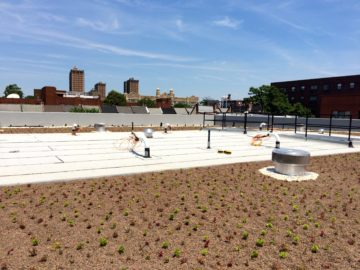11,500 SF green roof using ZinCo hard goods, Stancills soil and Emory Knoll Farm green roof plants
